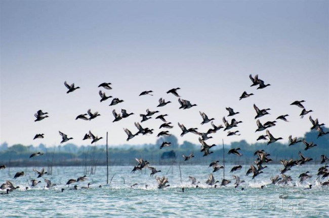 Bird census: Over a million winged guests descend on Chilika