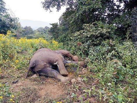 Carcasses of two elephants recovered from Keonjhar forest