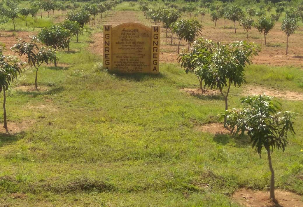 Odisha to execute forestry projects worth Rs 602 cr under MGNREGA in FY21